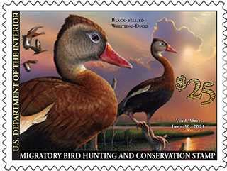 Buy Your 2020-2021 Federal Duck Stamp