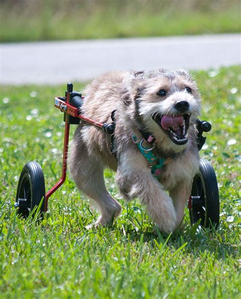 Best Dog Wheelchair Reviews of 2021 at TopProducts