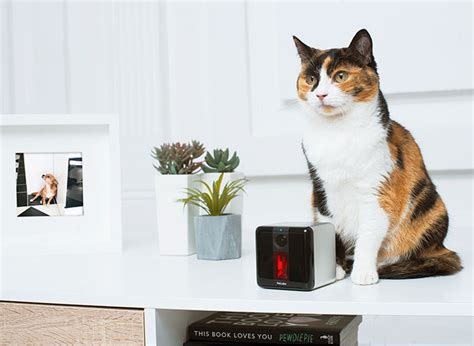 Petcube Play: Smart Cat Camera with Laser Game - Slash Pets