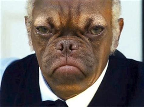 Earl The Grumpy Puppy Is The Newest Cranky Internet Meme
