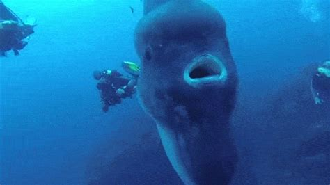This Creature Of The Deep Is So Huge That It Might Inhale