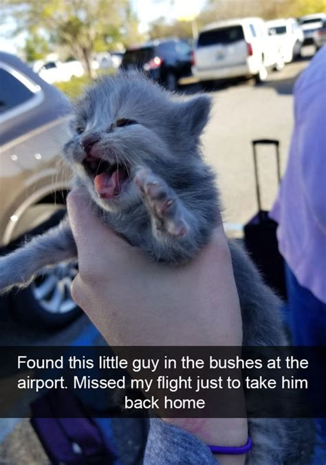 21 Funny Cat Snapchats That Will Make Your Day | Top13