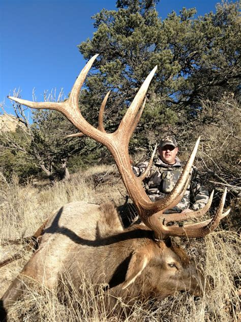 New Mexico Elk Hunts | Top Notch Outfitters