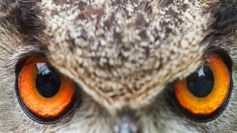 Bring stunning eyes to your desktop with this free 4K Wild