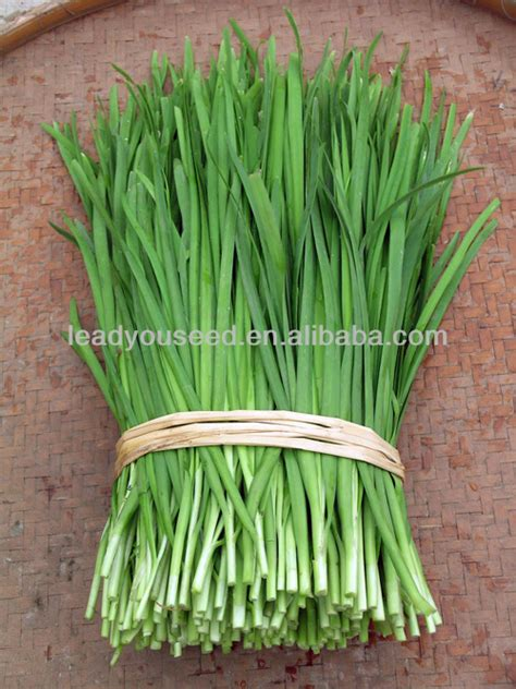Le01 Guanglian Wide Leaf Green Chinese Chives Seeds - Buy