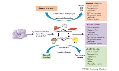 Cancer cachexia: malignant inflammation, tumorkines, and