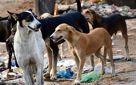 10 Reasons why we should KILL stray dogs in Kerala - Meen